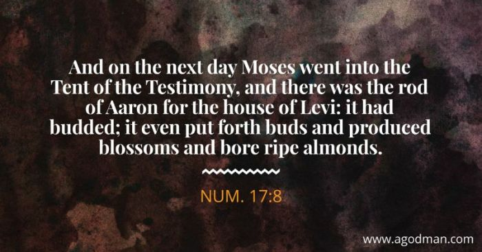 Num. 17:8 And on the next day Moses went into the Tent of the Testimony, and there was the rod of Aaron for the house of Levi: it had budded; it even put forth buds and produced blossoms and bore ripe almonds.