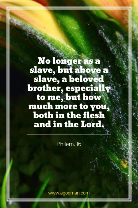 Philem. 16 No longer as a slave, but above a slave, a beloved brother, especially to me, but how much more to you, both in the flesh and in the Lord.