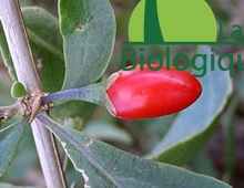 goji_super_fruit_himalaya_antioxydants