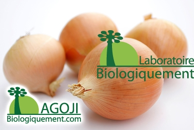 L'oignon, un aliment médicament, alicament, antioxydant naturel