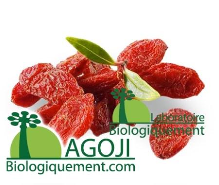 La baie de Goji Bio antioxydant naturel puissant