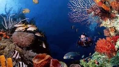 Photo of الثروات في الأرض أكثر مما يعتقد وكميات كبيرة من الكربون مخزونة في الكائنات الدقيقة بقاع البحر