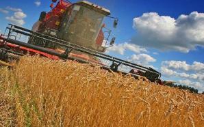 إنتاج الحبوب بلغ 96 مليون قنطار خلال الموسم الفلاحي 2016-…