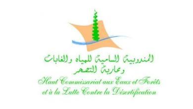 Photo of المندوبية السامية للمياه والغابات وحقيقة تفويت أراض بـ 700 درهم للمتر