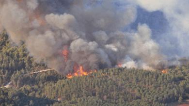 Photo of تاونات: حريق يأتي على 9 هكتارات من الأشجار