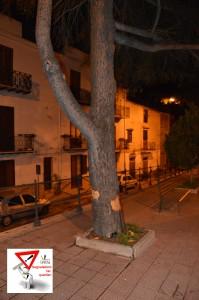 atti vandalici albero