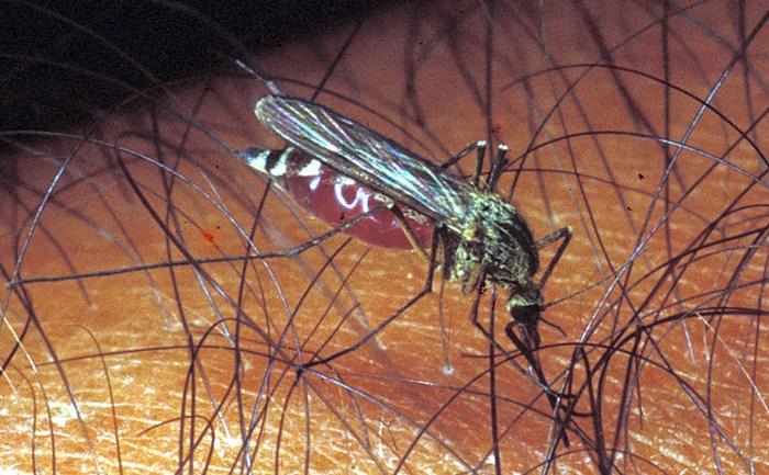 Regione Lazio. Febbre Chikungunya: 252 casi nel Lazio tra Roma, Latina e Anzio