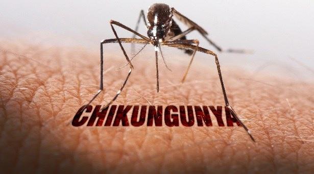 Chikungunya: finita emergenza nel territorio della Asl 2, riparte la raccolta di sangue
