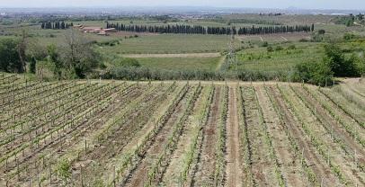 Regione Lazio. Agricoltura: approvata in Giunta la richiesta di calamità per la siccità