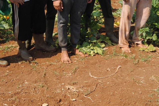 Latina. Agricoltura:arrestato altro imprenditore