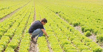 Regione. Agricoltura:40 milioni per l'ammodernamento degli impianti di irrigazione