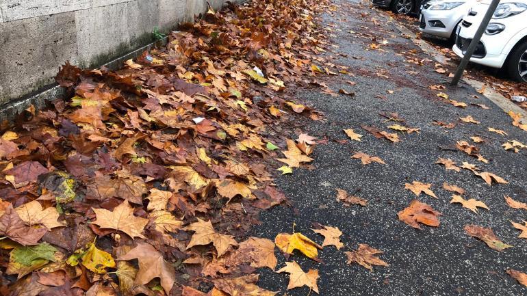"""Roma – Lungotevere:""""Da Ama e Campidoglio piano foglie insufficiente"""""""