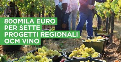Agricoltura: ulteriori 800 mila euro per progetti regionali Ocm vino