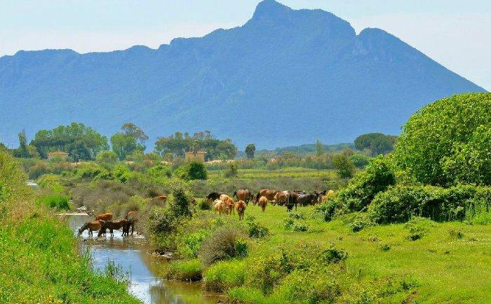 Consulta tutela animali di Forza Italia – Roma : i Daini del Parco del Circeo saranno destinati agli allevamenti e all'attività venatoria ossia la caccia