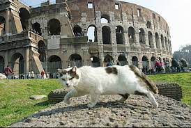 Roma. Le proposte delle associazioni animaliste per le elezioni