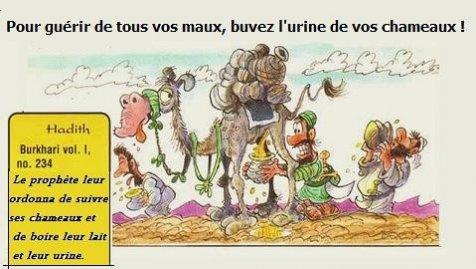 Afbeeldingsresultaat voor urine de chameau