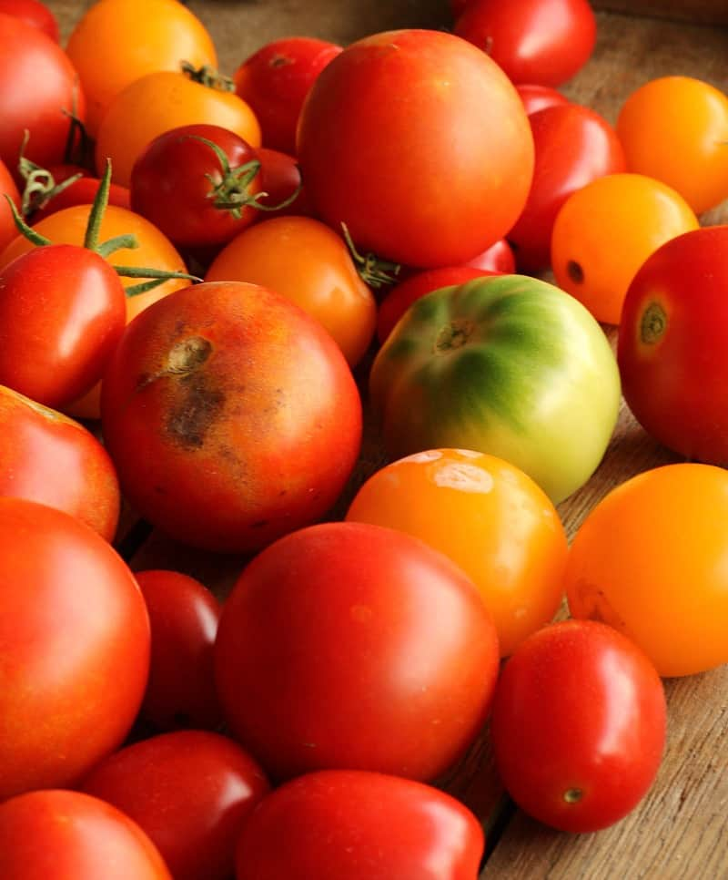 pile of heirloom tomatoes in a variety of reds, yellow and green.