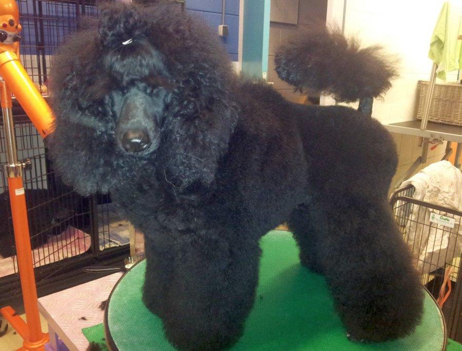de-honden-van-agouti-1