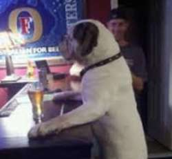 Bier voor honden