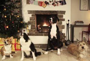 Jingle Bells, maar dan door blaffende honden