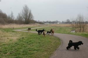 wandeling-hondenschool
