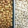 Cipollotti da seme selezionati - Certaldo