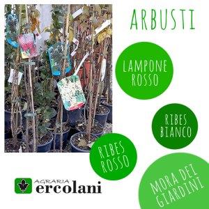 Arbusti di lampone, more, ribes - Certaldo