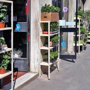 Piante da balcone, giardino e orto - Agraria Ercolani - Certaldo