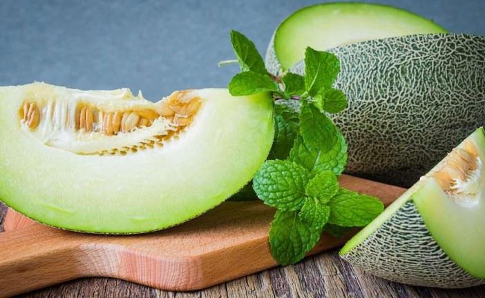 Maraîchage : Melon, choix variétal