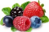 Dynamisme du secteur des petits fruits rouges