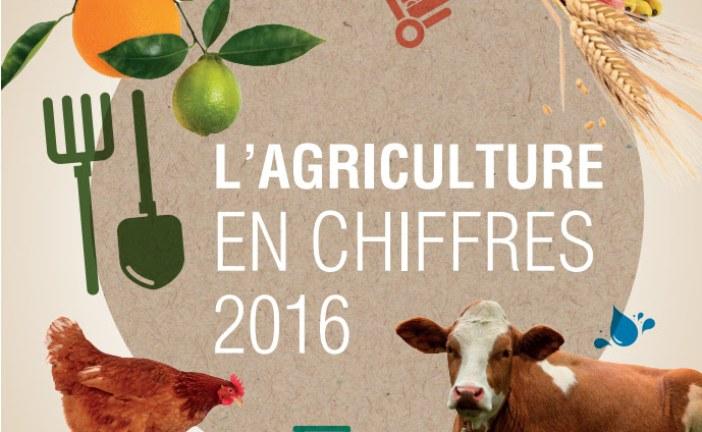 L'agriculture marocaine en chiffres – 2016