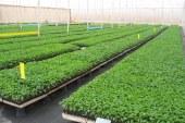 مشاتل الخضروات بمنطقة سوس, قطاع أساسي عالي التقنية
