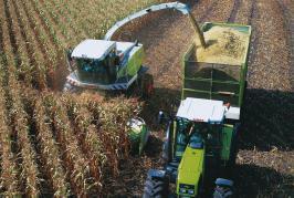 Maïs ensilage: éléments pour bien choisir sa variété