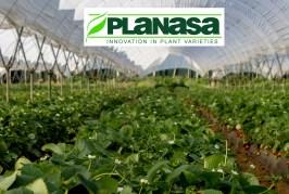 SAVANA se consolide au Maroc avec 10 millions de plants de plus qu'en 2019