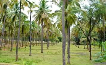 cocunut farm