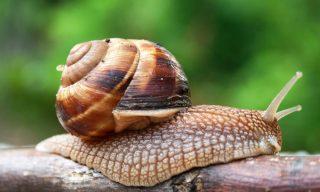 Cone snail's deadly venom provides better medicines 1