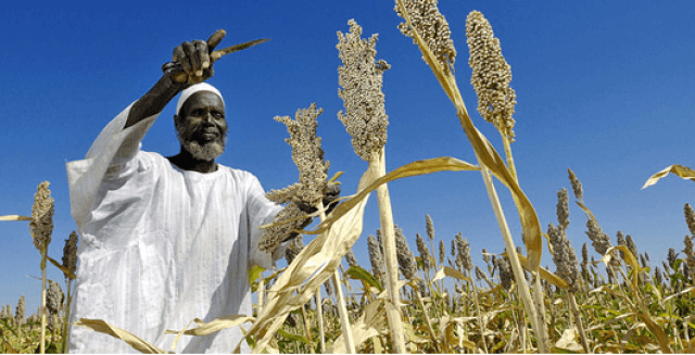 CBN Agric Loan