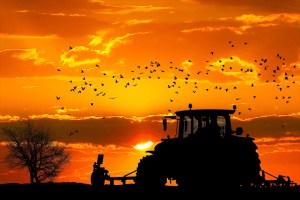 un trattore in un campo, al tramonto
