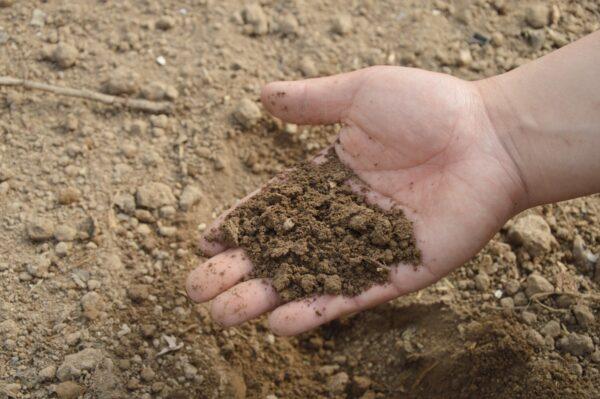 Una mano che raccoglie del terreno
