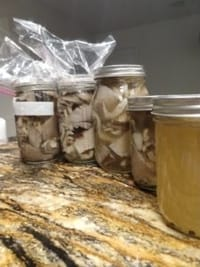 Jars packed with mushrooms and spices, ready to start fermentation