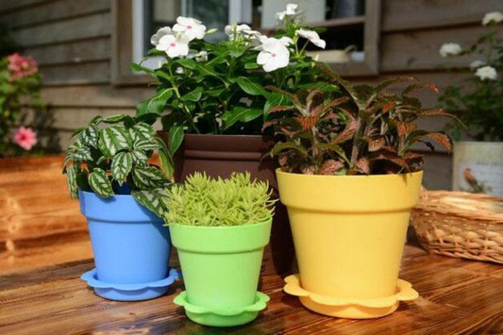 Garden Bright Colored Flower Pots For Plants  Bonsai Clearance     bright color flower pots