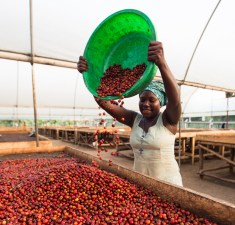 Joy, one of our team posing for the camera with her cherries!