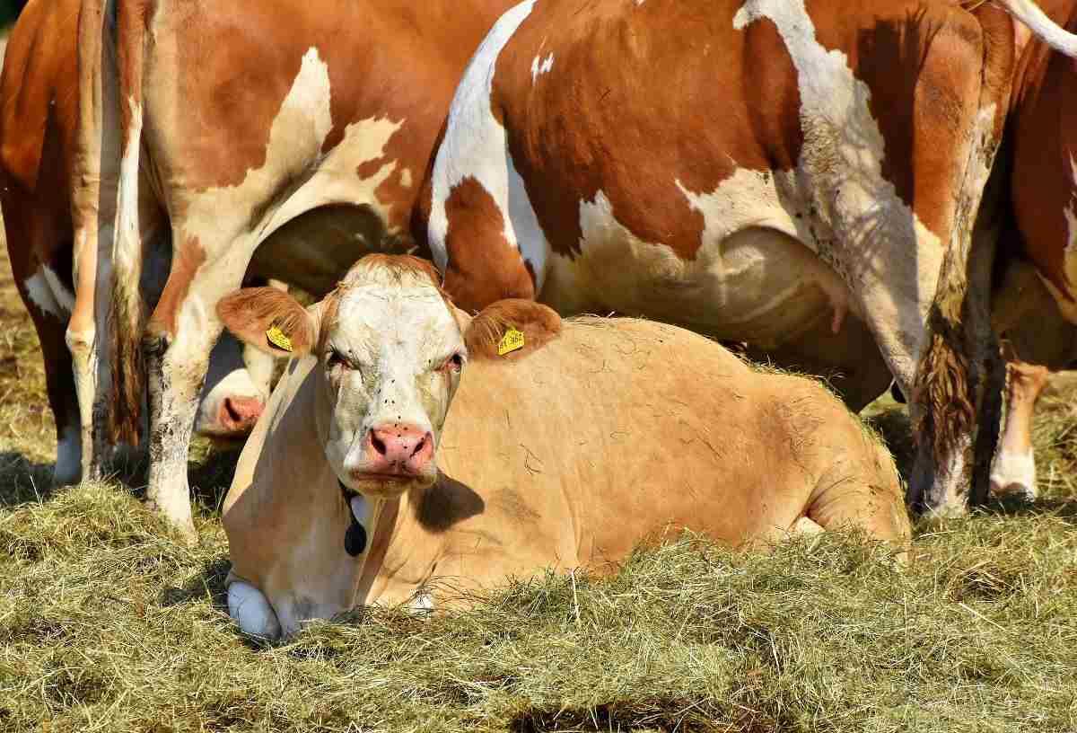 Busienss Plan for Dairy Farming in Kerala