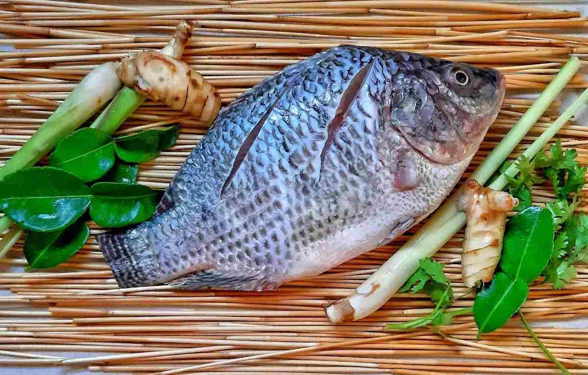 Tilapia Fish Farming In Tanks