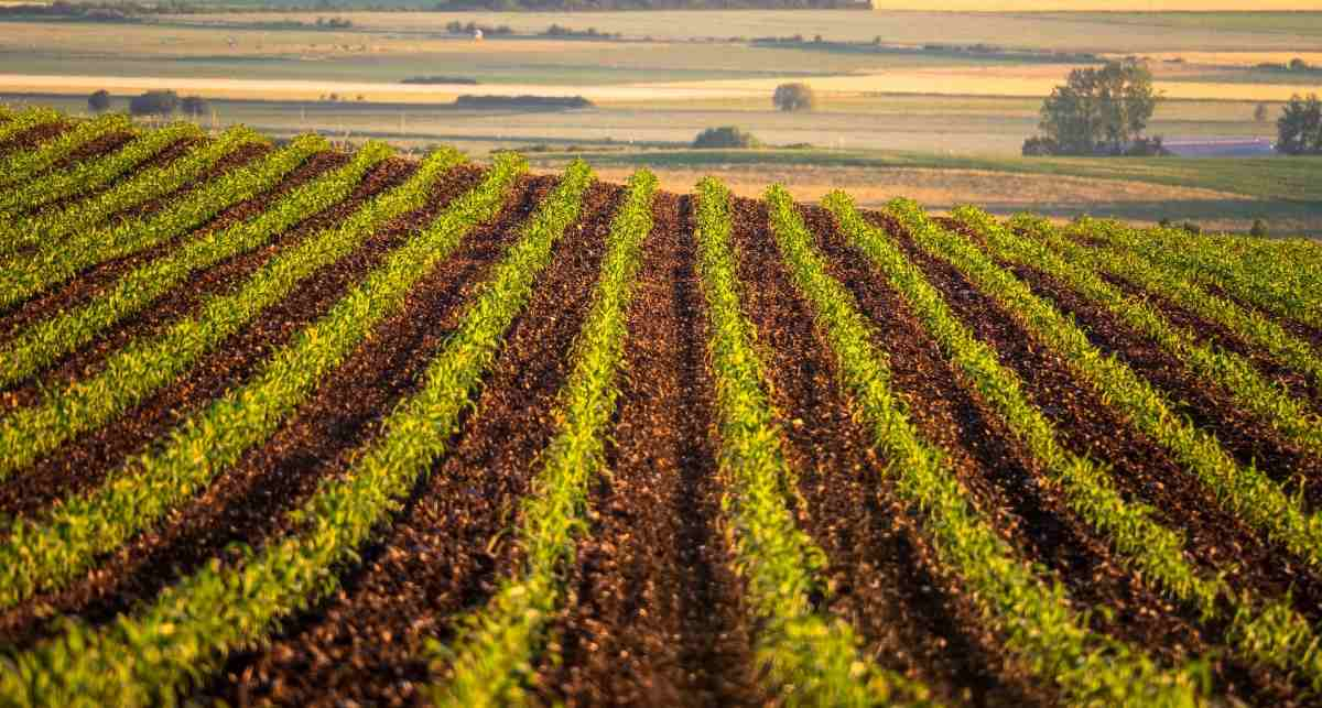 Guide to Arable Farming, Agricultural Practices
