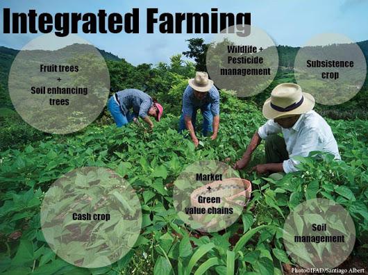 Integrated Farming