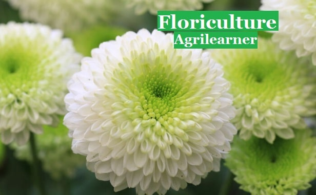 Floriculture One Liner Question
