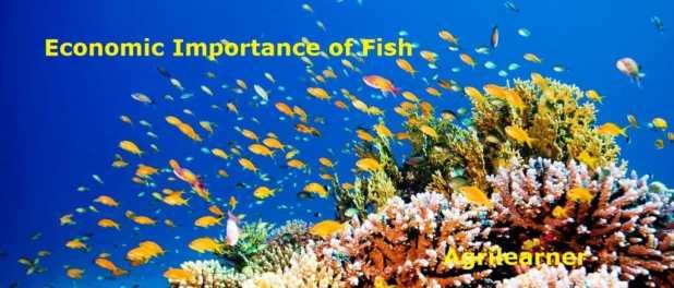 Economic Importance of Fish