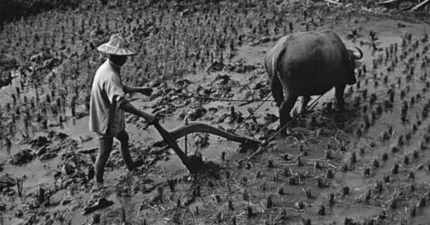 Agriculture History in India