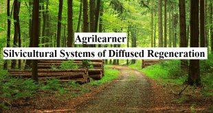Silvicultural Diffused Regeneration
